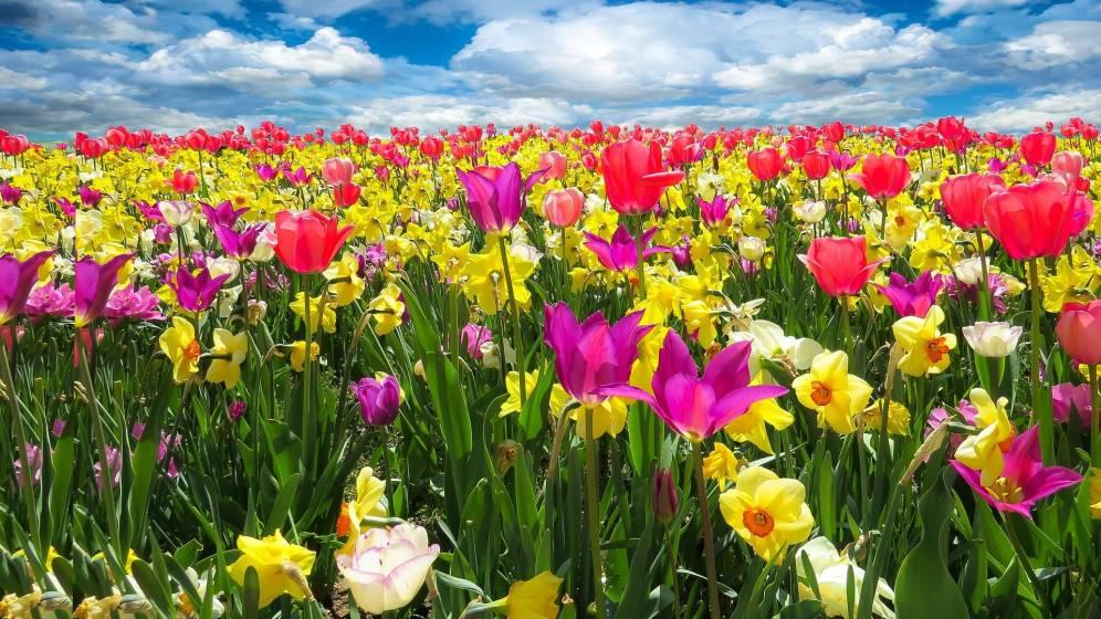 Conferencias y talleres GRATUITOS esta primavera en HAZKUNDE